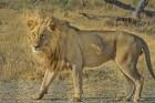 Eksotiska daba un fascinējoši dzīvnieki - iepazīsti Dienvidāfrikas Republiku 9