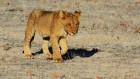 Eksotiska daba un fascinējoši dzīvnieki - iepazīsti Dienvidāfrikas Republiku 10