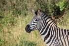 Eksotiska daba un fascinējoši dzīvnieki - iepazīsti Dienvidāfrikas Republiku 14