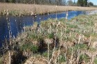 Travelnews.lv apceļo noslēpumainos Entu ezerus un Rīsas purva dabas taku Igaunijā 9
