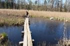 Travelnews.lv apceļo noslēpumainos Entu ezerus un Rīsas purva dabas taku Igaunijā 10