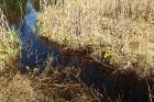Travelnews.lv apceļo noslēpumainos Entu ezerus un Rīsas purva dabas taku Igaunijā 14