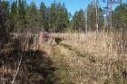 Travelnews.lv apceļo noslēpumainos Entu ezerus un Rīsas purva dabas taku Igaunijā 16