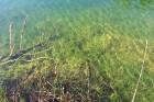Travelnews.lv apceļo noslēpumainos Entu ezerus un Rīsas purva dabas taku Igaunijā 20