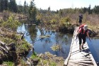 Travelnews.lv apceļo noslēpumainos Entu ezerus un Rīsas purva dabas taku Igaunijā 24