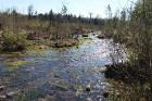 Travelnews.lv apceļo noslēpumainos Entu ezerus un Rīsas purva dabas taku Igaunijā 25