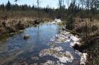 Travelnews.lv apceļo noslēpumainos Entu ezerus un Rīsas purva dabas taku Igaunijā 29