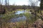 Travelnews.lv apceļo noslēpumainos Entu ezerus un Rīsas purva dabas taku Igaunijā 31