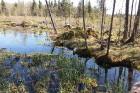 Travelnews.lv apceļo noslēpumainos Entu ezerus un Rīsas purva dabas taku Igaunijā 32