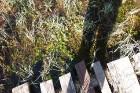 Travelnews.lv apceļo noslēpumainos Entu ezerus un Rīsas purva dabas taku Igaunijā 33