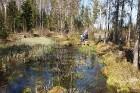Travelnews.lv apceļo noslēpumainos Entu ezerus un Rīsas purva dabas taku Igaunijā 34