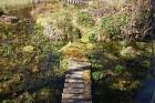 Travelnews.lv apceļo noslēpumainos Entu ezerus un Rīsas purva dabas taku Igaunijā 35