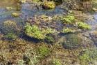 Travelnews.lv apceļo noslēpumainos Entu ezerus un Rīsas purva dabas taku Igaunijā 36