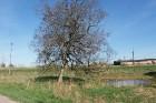 Travelnews.lv apceļo noslēpumainos Entu ezerus un Rīsas purva dabas taku Igaunijā 37