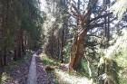 Travelnews.lv apceļo noslēpumainos Entu ezerus un Rīsas purva dabas taku Igaunijā 39