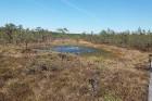 Travelnews.lv apceļo noslēpumainos Entu ezerus un Rīsas purva dabas taku Igaunijā 41