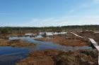 Travelnews.lv apceļo noslēpumainos Entu ezerus un Rīsas purva dabas taku Igaunijā 42