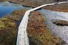 Travelnews.lv apceļo noslēpumainos Entu ezerus un Rīsas purva dabas taku Igaunijā 43