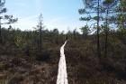 Travelnews.lv apceļo noslēpumainos Entu ezerus un Rīsas purva dabas taku Igaunijā 45