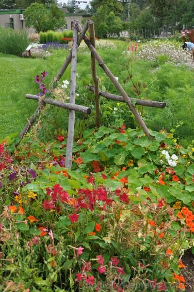 Augusts Nacionālajā botāniskajā dārzā Salaspilī lutina ar īstu ziedošo pasaku