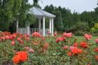 Augusts Nacionālajā botāniskajā dārzā Salaspilī lutina ar īstu ziedošo pasaku 5