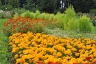 Augusts Nacionālajā botāniskajā dārzā Salaspilī lutina ar īstu ziedošo pasaku 14