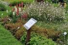 Augusts Nacionālajā botāniskajā dārzā Salaspilī lutina ar īstu ziedošo pasaku 17