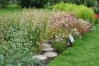 Augusts Nacionālajā botāniskajā dārzā Salaspilī lutina ar īstu ziedošo pasaku 19