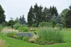 Augusts Nacionālajā botāniskajā dārzā Salaspilī lutina ar īstu ziedošo pasaku 20