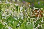 Augusts Nacionālajā botāniskajā dārzā Salaspilī lutina ar īstu ziedošo pasaku 22