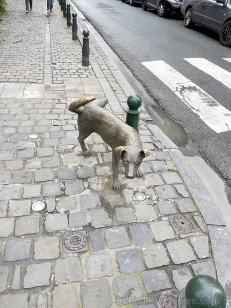 Briselē čurāšanai ir īpaša nozīme, jo pilsētā meklējams arī čurājošais suns. Kā sacīja kāda paziņa -