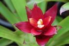 Travelnews.lv kopā ar «365 brīvdienas» un «Turkish Airlines» iepazīst tropu botānisko dārzu «Nong Nooch Tropical Garden» 12