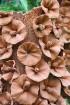 Travelnews.lv kopā ar «365 brīvdienas» un «Turkish Airlines» iepazīst tropu botānisko dārzu «Nong Nooch Tropical Garden» 35