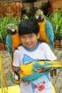 Travelnews.lv kopā ar «365 brīvdienas» un «Turkish Airlines» iepazīst tropu botānisko dārzu «Nong Nooch Tropical Garden» 46