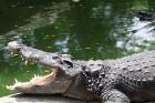 Travelnews.lv kopā ar «365 brīvdienas» un «Turkish Airlines» apmeklē Pataijas akmens parku un krokodilu fermu 13