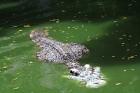Travelnews.lv kopā ar «365 brīvdienas» un «Turkish Airlines» apmeklē Pataijas akmens parku un krokodilu fermu 14
