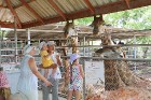 Travelnews.lv kopā ar «365 brīvdienas» un «Turkish Airlines» apmeklē Pataijas akmens parku un krokodilu fermu 20