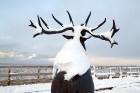 Ventspils «Lemberga hūtē» bauda sniegu, bet gaida salu, lai tas varētu noturēties 19