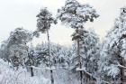 Ventspils «Lemberga hūtē» bauda sniegu, bet gaida salu, lai tas varētu noturēties 12
