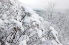 Ventspils «Lemberga hūtē» bauda sniegu, bet gaida salu, lai tas varētu noturēties 15