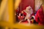 Skaistākie Igaunijas Ziemassvētku tirdziņi ar savu šarmu vilina arī latviešus 8