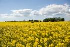 Iepazīsti Zviedrijas dabas dažādību. Foto: Miriam Preis/imagebank.sweden.se 4