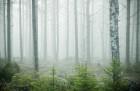 Iepazīsti Zviedrijas dabas dažādību. Foto: Sara Ingman/imagebank.sweden.se 11