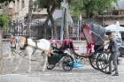 Travelnews.lv dodas ekskursijā apskatīt Turcijas mazās pilsētiņas Konjas tuvumā. Sadarbībā ar Turkish Airlines 57