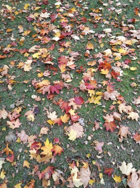 Rīgas parki un dārzi pārklājas rudens zeltā