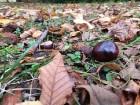 Rīgas parki un dārzi pārklājas rudens zeltā 5