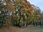 Rīgas parki un dārzi pārklājas rudens zeltā 3