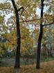 Rīgas parki un dārzi pārklājas rudens zeltā 7