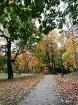 Rīgas parki un dārzi pārklājas rudens zeltā 10