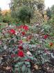 Rīgas parki un dārzi pārklājas rudens zeltā 17